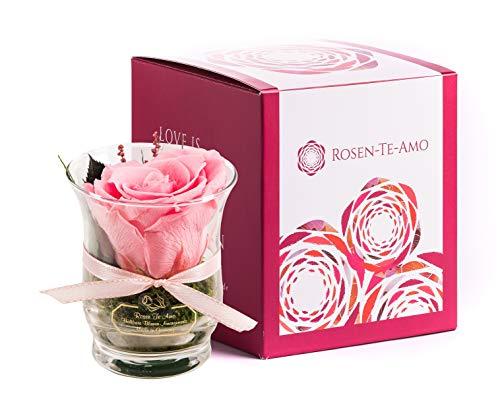 Rosen-Te-Amo, duftende Premium konservierte ewige Rose pink in Vase handgefertigt mit echtem Bindegrün in feiner Geschenk-Box (neu). Infinity Rosen: Geschenke für Frauen & Deko Wohn-Zimmer